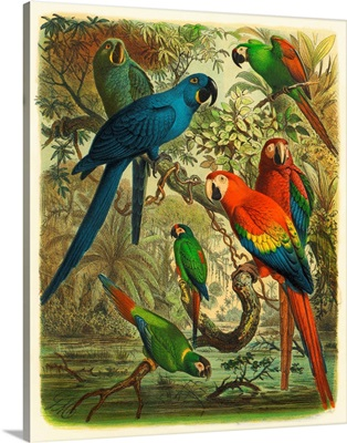 Cassel Tropical Birds III