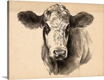 Charcoal Cow I