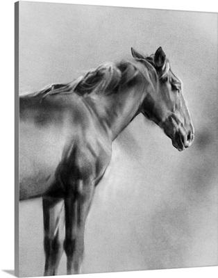 Charcoal Equine Portrait I