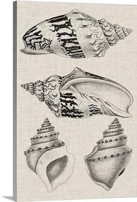 Charcoal & Linen Shells IV