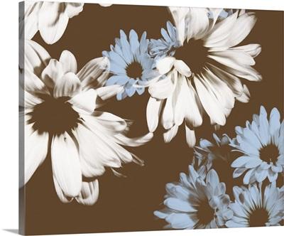 Chocolate Bloom I