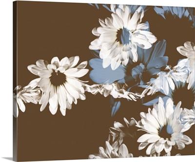 Chocolate Bloom II
