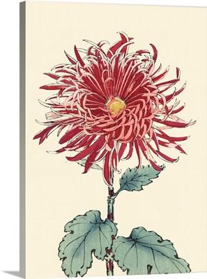 Chrysanthemum Woodblock I