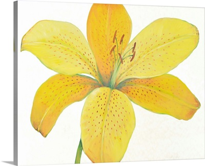 Citron Tiger Lily II
