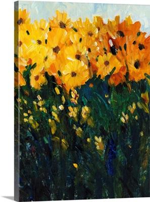 Color Spectrum Flowers II