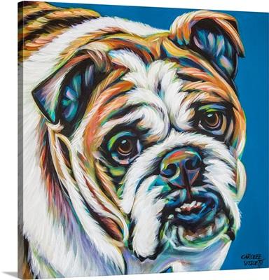 Colorful Bulldog