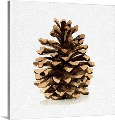 Conifer Cone I
