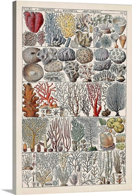 Coral Chart
