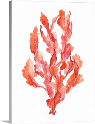 Coral Kelp II