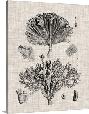 Coral Specimen III