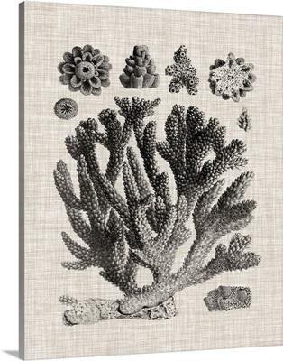 Coral Specimen IV