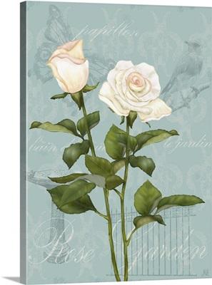 Cream Rose II
