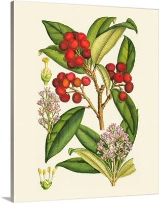 Crimson Berries I