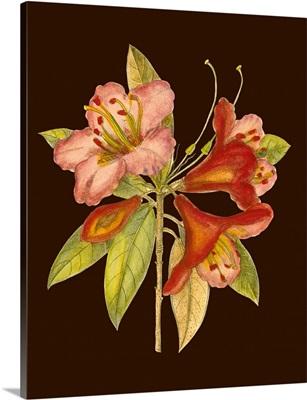 Crimson Blooms I