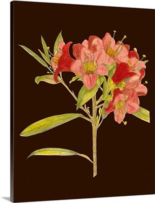Crimson Blooms IV