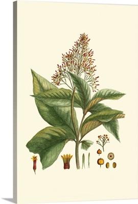 Crimson Botanical III