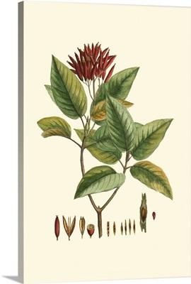 Crimson Botanical IV
