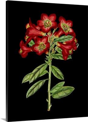 Crimson Flowers on Black IV
