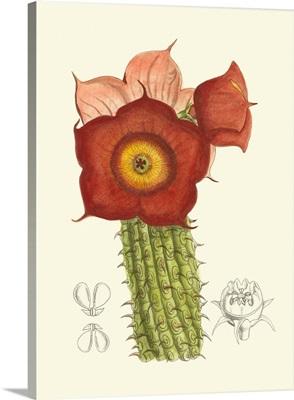 Curtis Flowering Cactus II