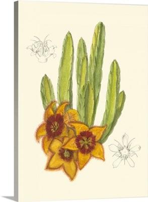 Curtis Flowering Cactus III