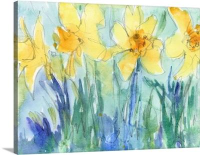 Daffodil Blooms II