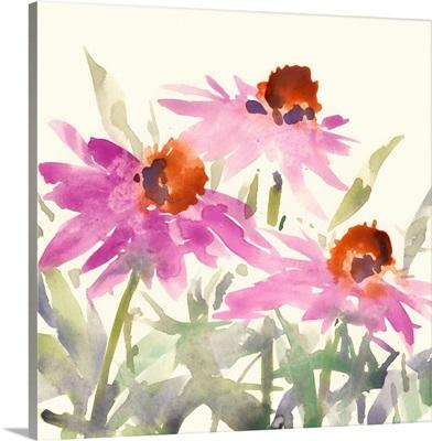 Daisy Garden Views II