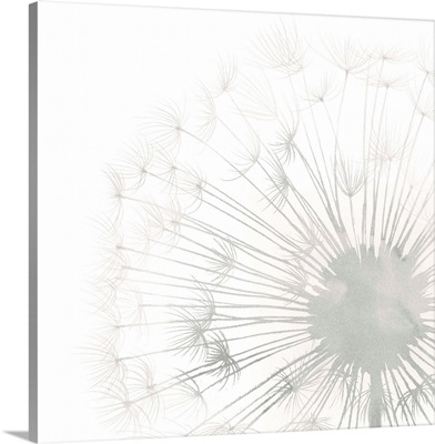 Dandelion Whisper II