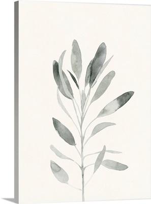 Delicate Sage Botanical II
