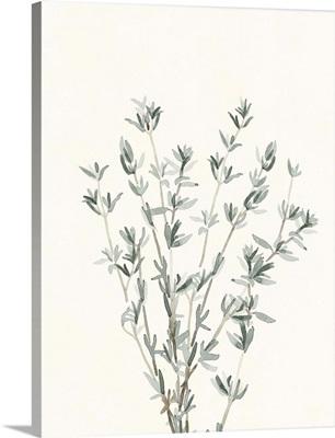 Delicate Sage Botanical III