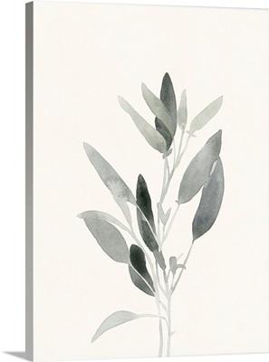 Delicate Sage Botanical IV