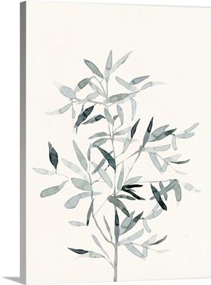Delicate Sage Botanical VI
