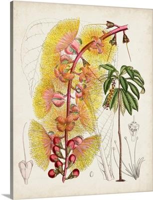 Delicate Tropicals VII