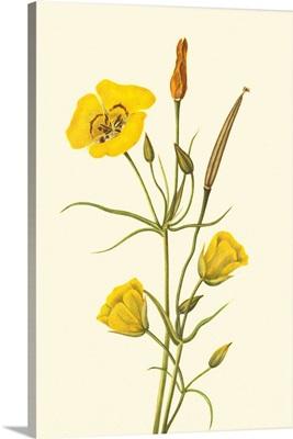 Delicate Wildflowers III