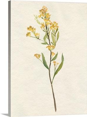Delicate Yellow II