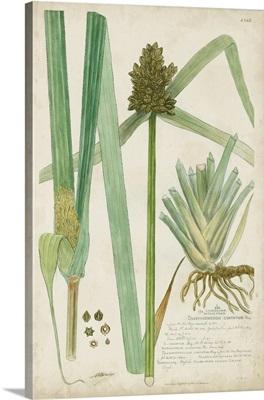 Descubes Botanical Grass III