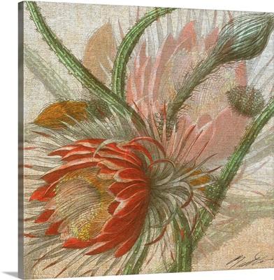 Desert Botanicals II