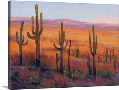 Desert Light I