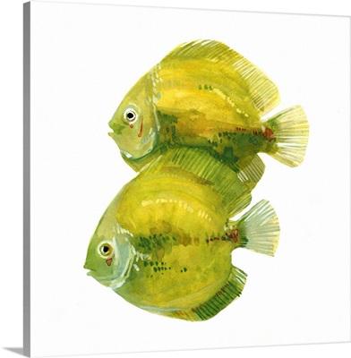 Discus Fish II