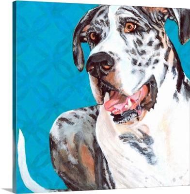 Dlynn's Dogs - Apollo