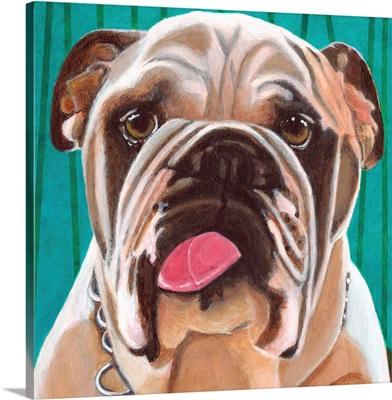 Dlynn's Dogs - Bosco