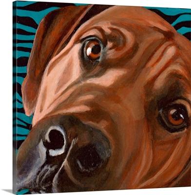 Dlynn's Dogs - Bunsen