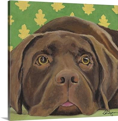 Dlynn's Dogs - Casey