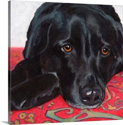 Dlynn's Dogs - Tallulah