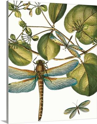 Dragonfly Medley I