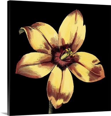 Dramatic Blooms IV