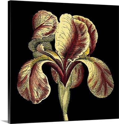 Dramatic Blooms VI