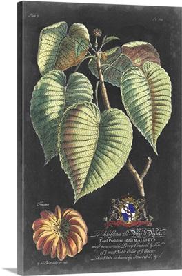Dramatic Royal Botanical I