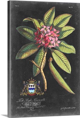 Dramatic Royal Botanical V