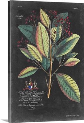 Dramatic Royal Botanical VI