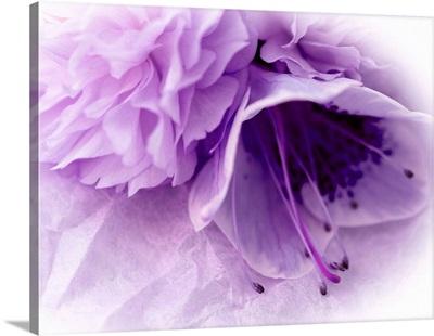 Dreamy Florals in Violet III